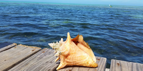Conch Belize