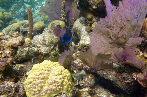 Soft corals are spectacular at the Blue Hole