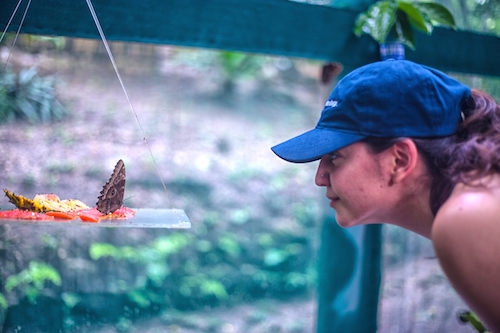 Butterfly Farm Belize