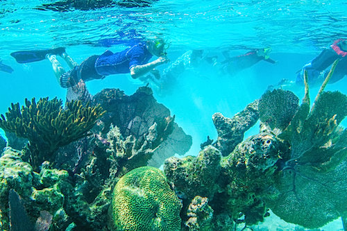 Snorkeling at Glover's Reef Atoll