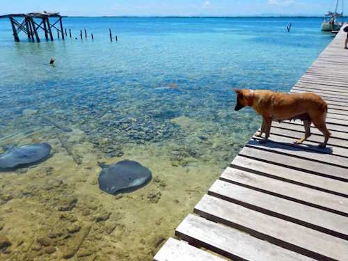 Dog Tobacco Caye, Belize