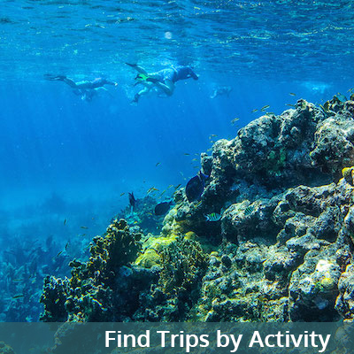 Find Trips by Activity