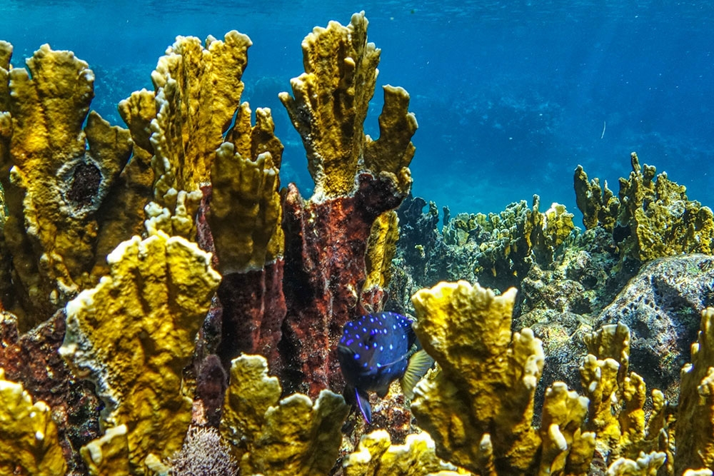 Snorkeling and scuba diving on the Belize Barrier Reef