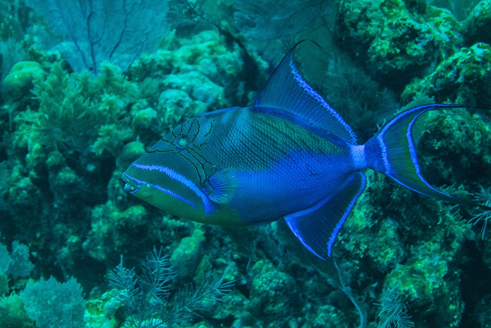 Discover the underwater world in Belize
