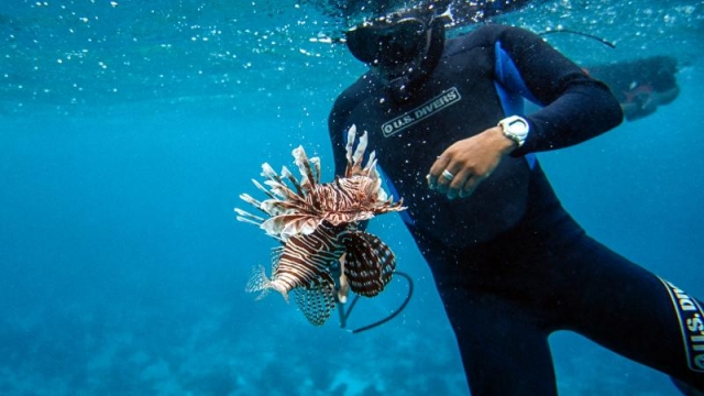 lionfish-killing-vacation_1.jpg