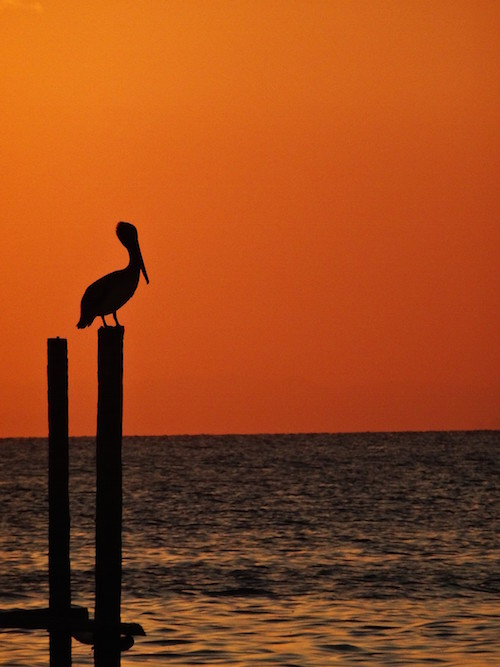 Pelican Sunset Belize