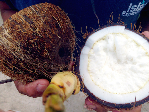 The inside of a freshly cut coconut, Belize