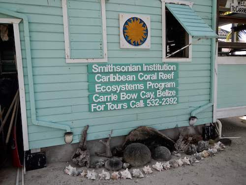 Visiting the Smithsonian Carrie Bow Caye Field Station