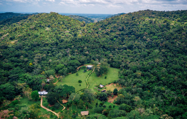 bocawina rainforest