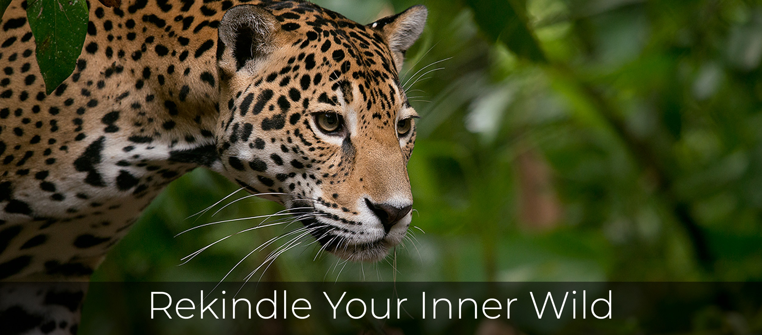 Rekindle Your Inner Wild