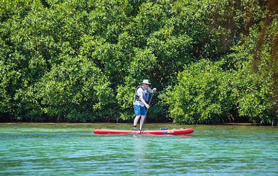 Stand Up Paddleboard (SUP) the Mangrove ranges
