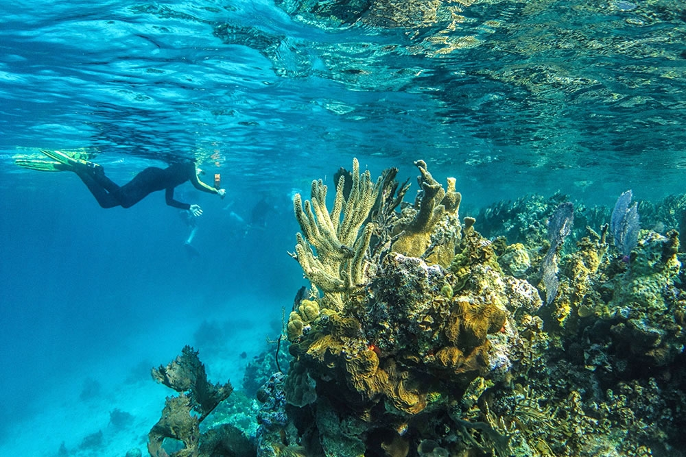 Lighthouse Reef - world-renowned dive and snorkel sites.