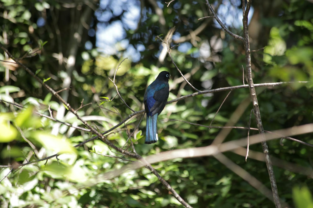 Birding at Bocawina Rainforest Resort