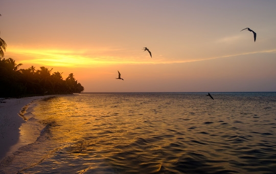 Visit Half Moon Caye's red-footed booby colony